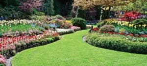 Green Lawn By Design