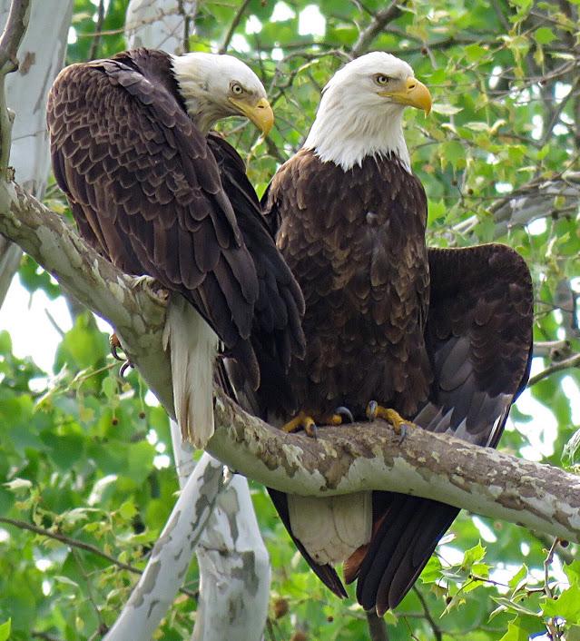 Eagles soar over Hamilton County